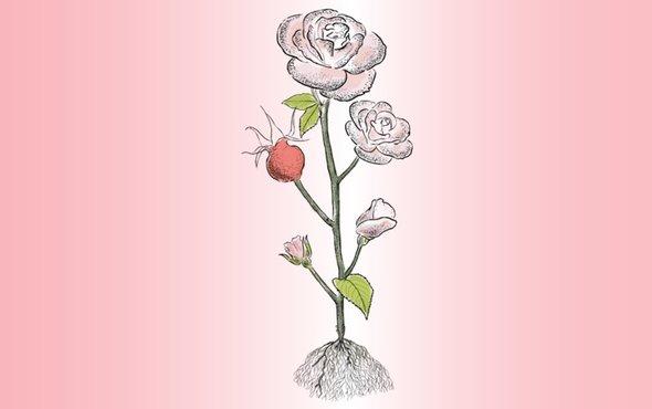 Illustration Rose Granville couleur Dior pour Magazine